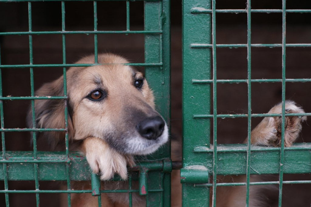 rescue dog shelter pet