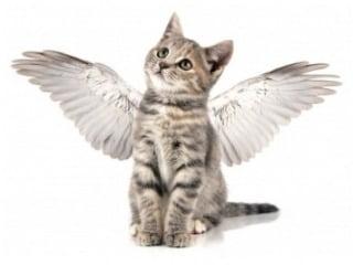 Pet guardian angel